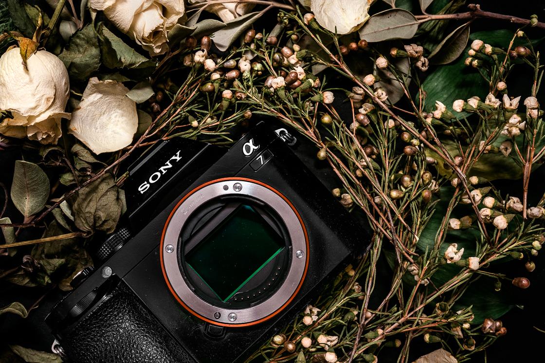Muutama Ajatus Kameran Vaihdosta – Vanhasta Sony α7:sta Uuteen α7III:seen
